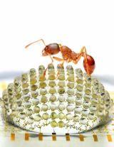 Articulo insectos 5 Mini